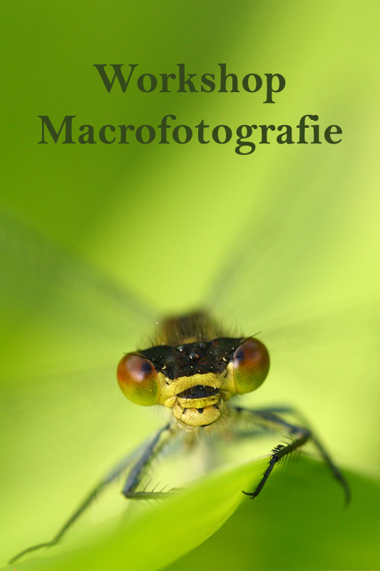 Workshop Macro Fotografie